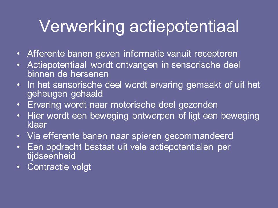 Verwerking actiepotentiaal Afferente banen geven informatie vanuit receptoren Actiepotentiaal wordt ontvangen in sensorische deel binnen de hersenen I