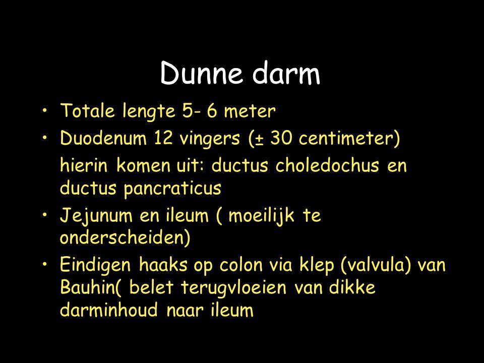 Dunne darm Totale lengte 5- 6 meter Duodenum 12 vingers (± 30 centimeter) hierin komen uit: ductus choledochus en ductus pancraticus Jejunum en ileum ( moeilijk te onderscheiden) Eindigen haaks op colon via klep (valvula) van Bauhin( belet terugvloeien van dikke darminhoud naar ileum