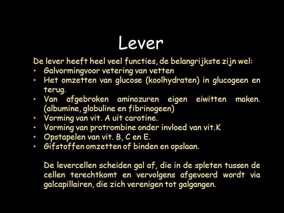 Lever De lever heeft heel veel functies, de belangrijkste zijn wel: Galvormingvoor vetering van vetten Het omzetten van glucose (koolhydraten) in glucogeen en terug.