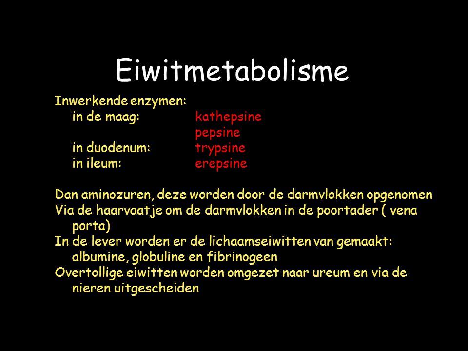 Eiwitmetabolisme Inwerkende enzymen: in de maag: kathepsine pepsine in duodenum:trypsine in ileum:erepsine Dan aminozuren, deze worden door de darmvlokken opgenomen Via de haarvaatje om de darmvlokken in de poortader ( vena porta) In de lever worden er de lichaamseiwitten van gemaakt: albumine, globuline en fibrinogeen Overtollige eiwitten worden omgezet naar ureum en via de nieren uitgescheiden