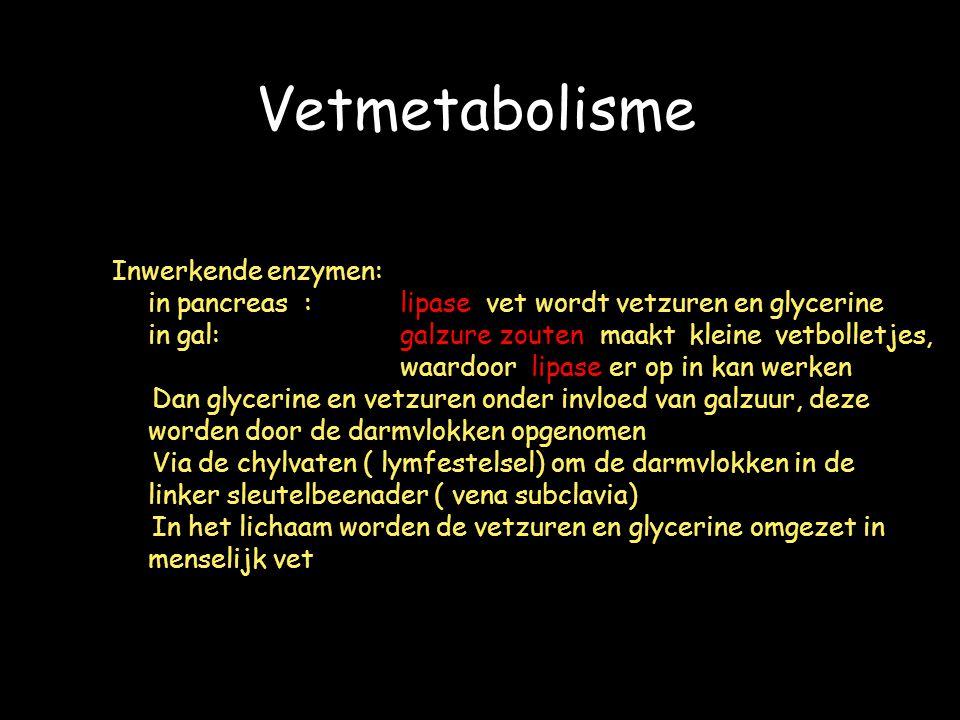 Vetmetabolisme Inwerkende enzymen: in pancreas:lipase vet wordt vetzuren en glycerine in gal:galzure zouten maakt kleine vetbolletjes, waardoor lipase er op in kan werken Dan glycerine en vetzuren onder invloed van galzuur, deze worden door de darmvlokken opgenomen Via de chylvaten ( lymfestelsel) om de darmvlokken in de linker sleutelbeenader ( vena subclavia) In het lichaam worden de vetzuren en glycerine omgezet in menselijk vet