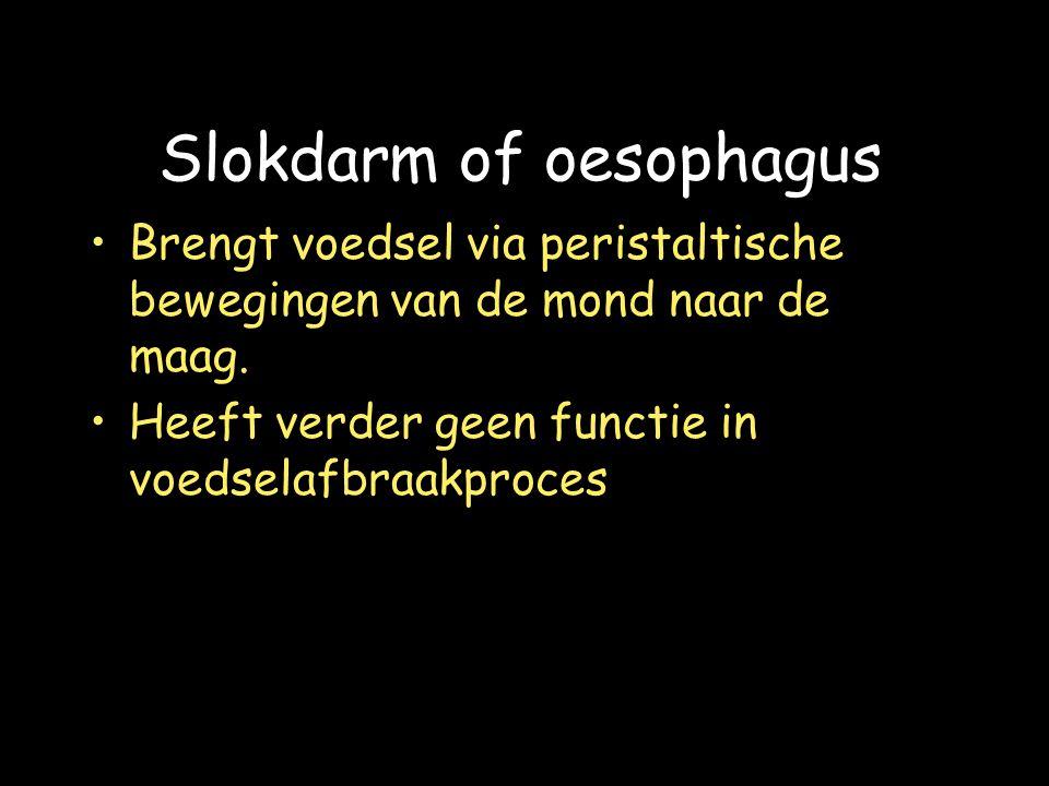 Slokdarm of oesophagus Brengt voedsel via peristaltische bewegingen van de mond naar de maag.