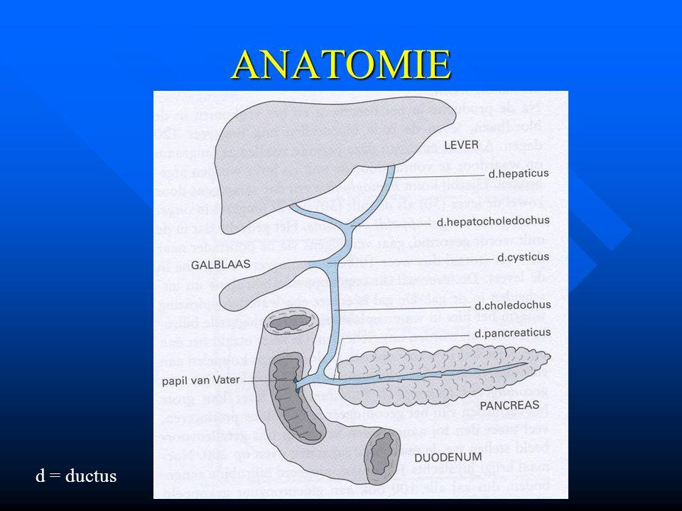 ANATOMIE d = ductus