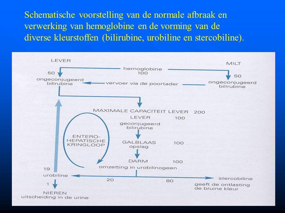 Schematische voorstelling van de normale afbraak en verwerking van hemoglobine en de vorming van de diverse kleurstoffen (bilirubine, urobiline en ste