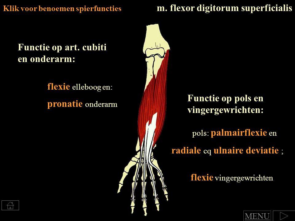 Klik voor benoemen spierfuncties m.flexor digitorum superficialis Functie op art.