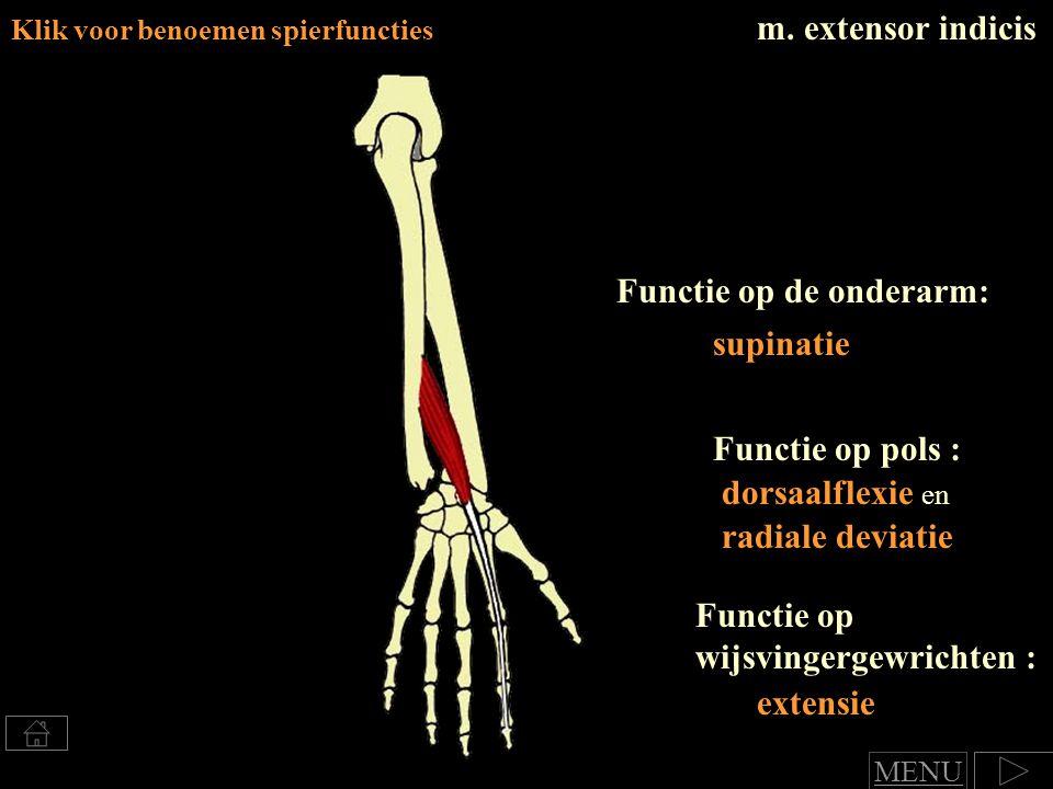 m. extensor indicis Klik voor benoemen spierfuncties Functie op de onderarm: supinatie Functie op pols : dorsaalflexie en radiale deviatie Functie op