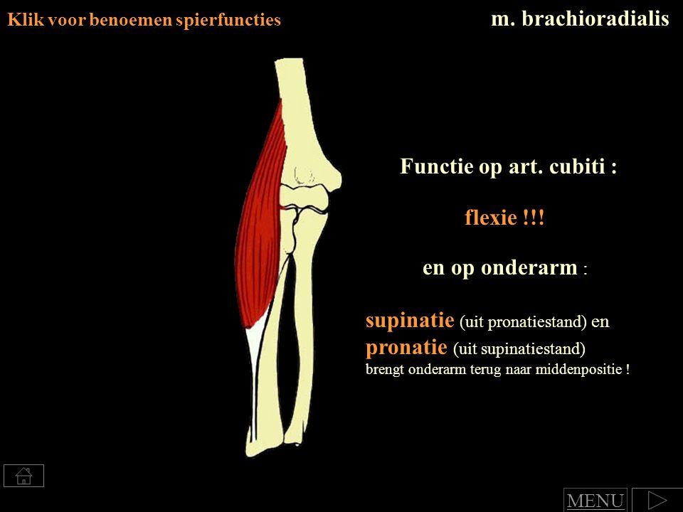 m. brachioradialis Klik voor benoemen spierfuncties supinatie (uit pronatiestand) en pronatie (uit supinatiestand) brengt onderarm terug naar middenpo