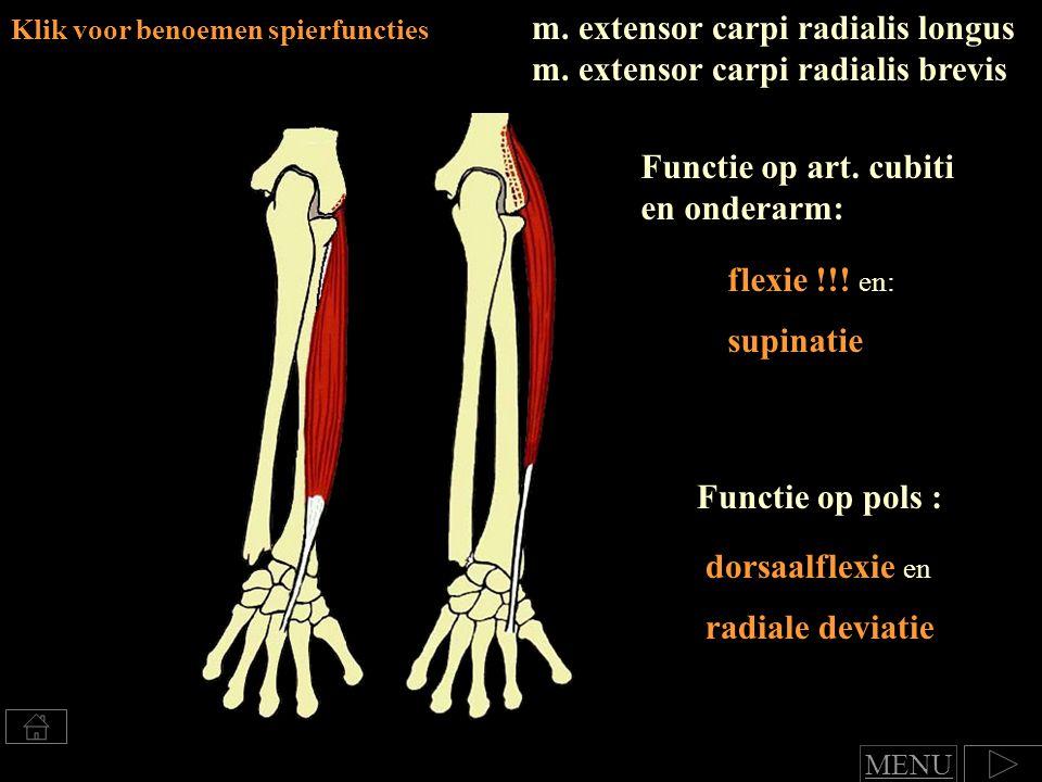 m.extensor carpi radialis longus m.