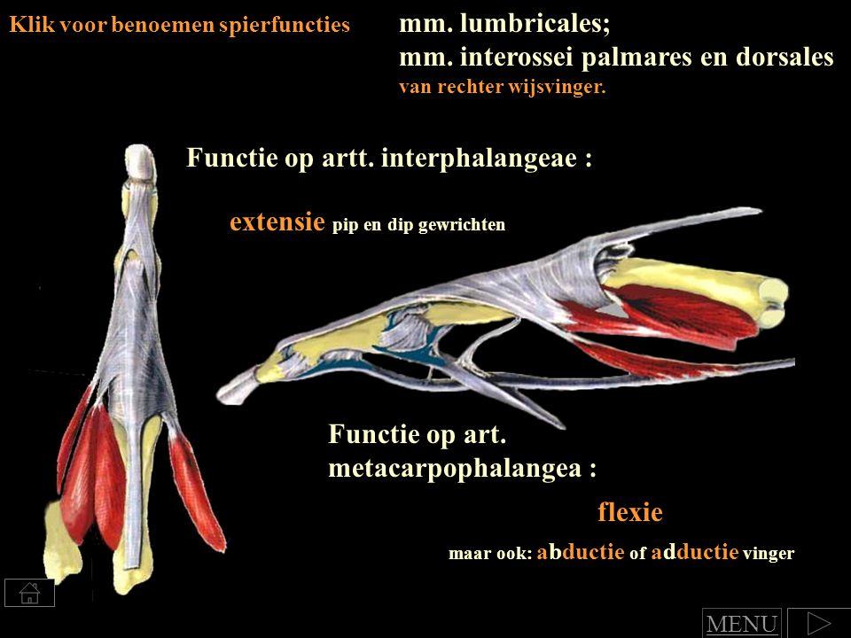 mm.lumbricales; mm. interossei palmares en dorsales van rechter wijsvinger.
