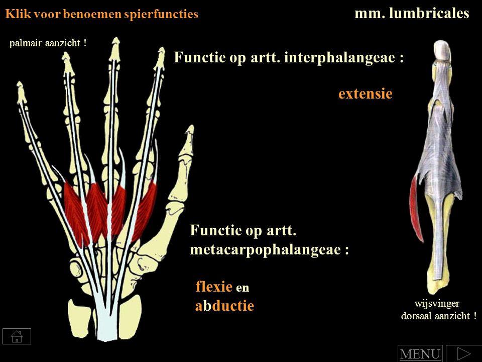 mm.lumbricales Klik voor benoemen spierfuncties Functie op artt.