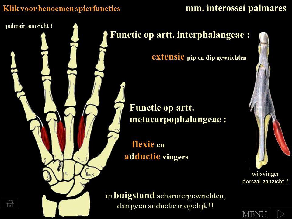 mm.interossei palmares Klik voor benoemen spierfuncties Functie op artt.