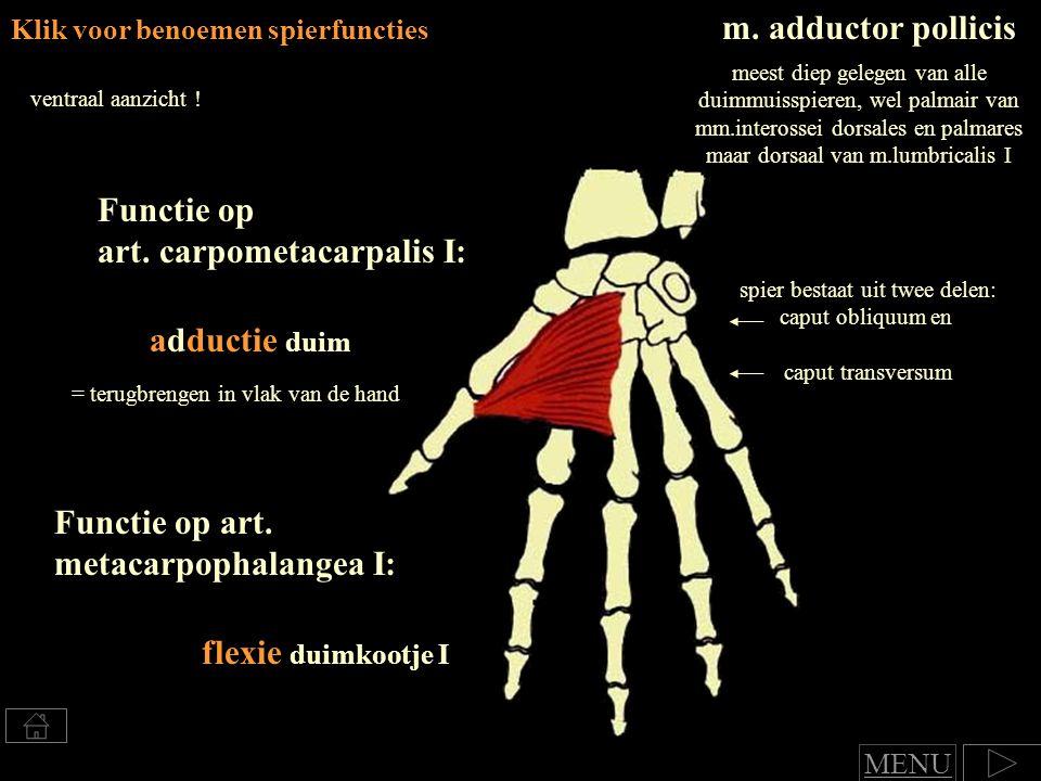 Klik voor benoemen spierfuncties m.adductor pollicis ventraal aanzicht .
