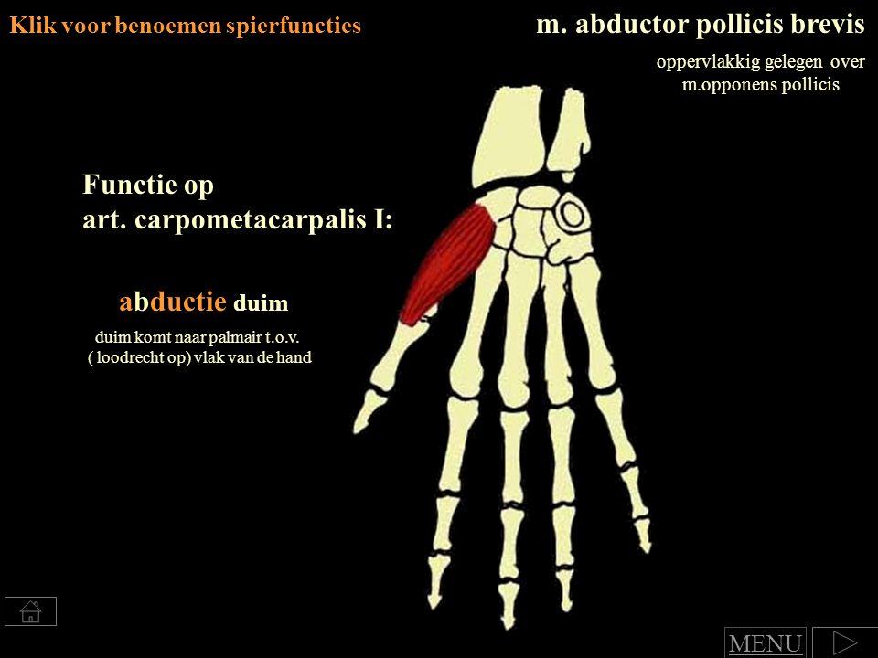 m.abductor pollicis brevis oppervlakkig gelegen over m.opponens pollicis Functie op art.