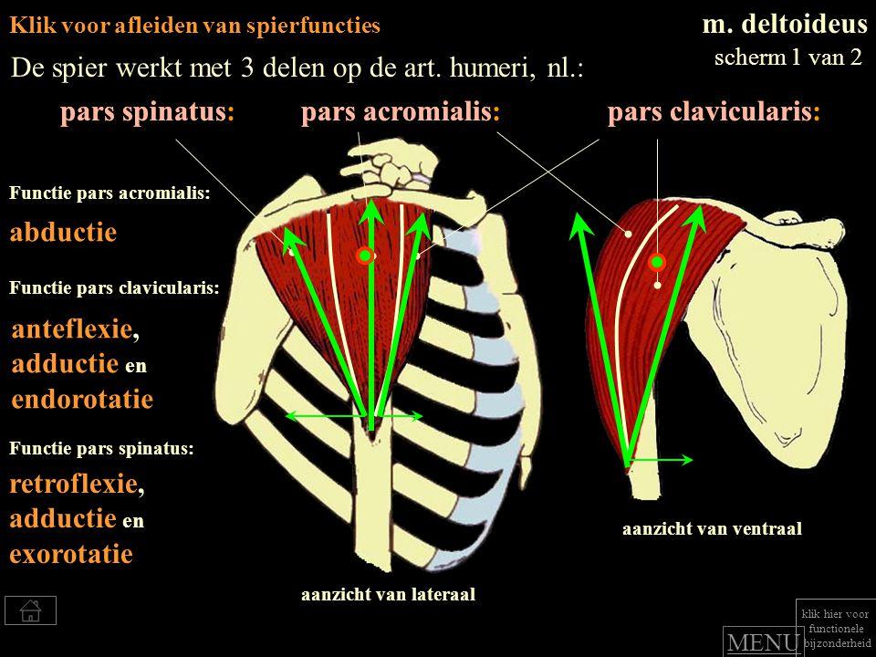 Klik voor afleiden van spierfuncties m.deltoideus De spier werkt met 3 delen op de art.