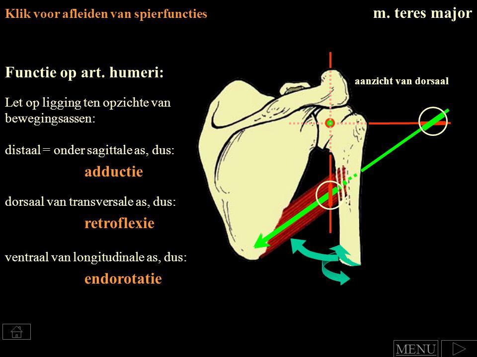 Klik voor afleiden van spierfuncties m.teres major Functie op art.