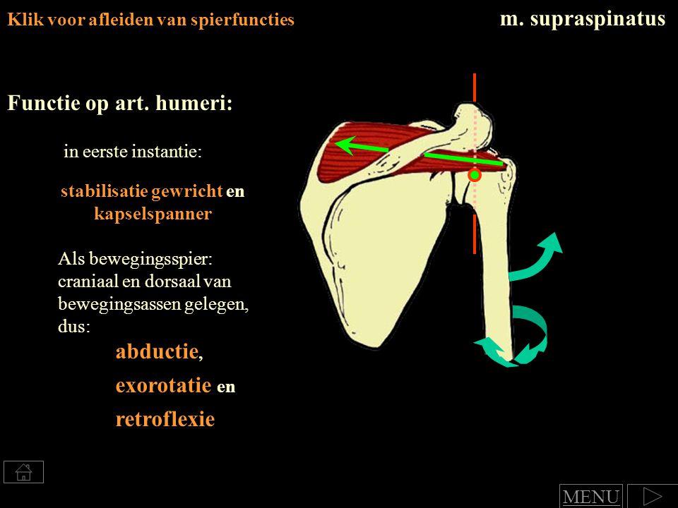 Klik voor afleiden van spierfuncties m.supraspinatus Functie op art.