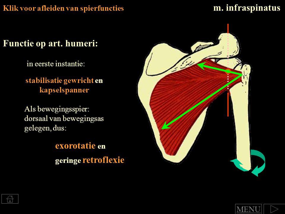 Klik voor afleiden van spierfuncties m.infraspinatus Functie op art.
