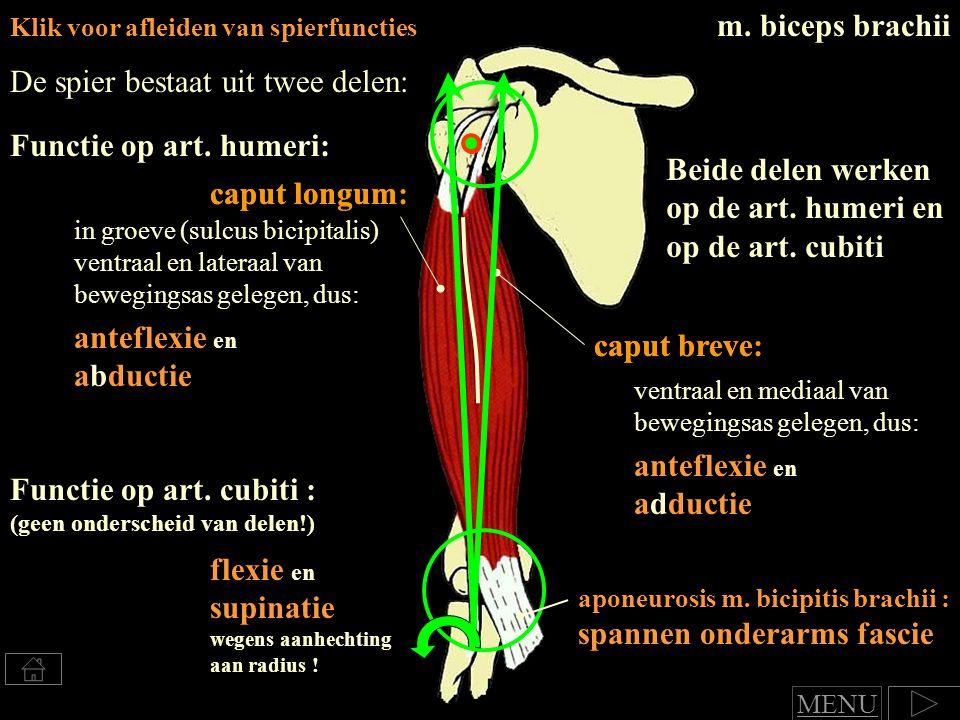 caput longum: Klik voor afleiden van spierfuncties m.