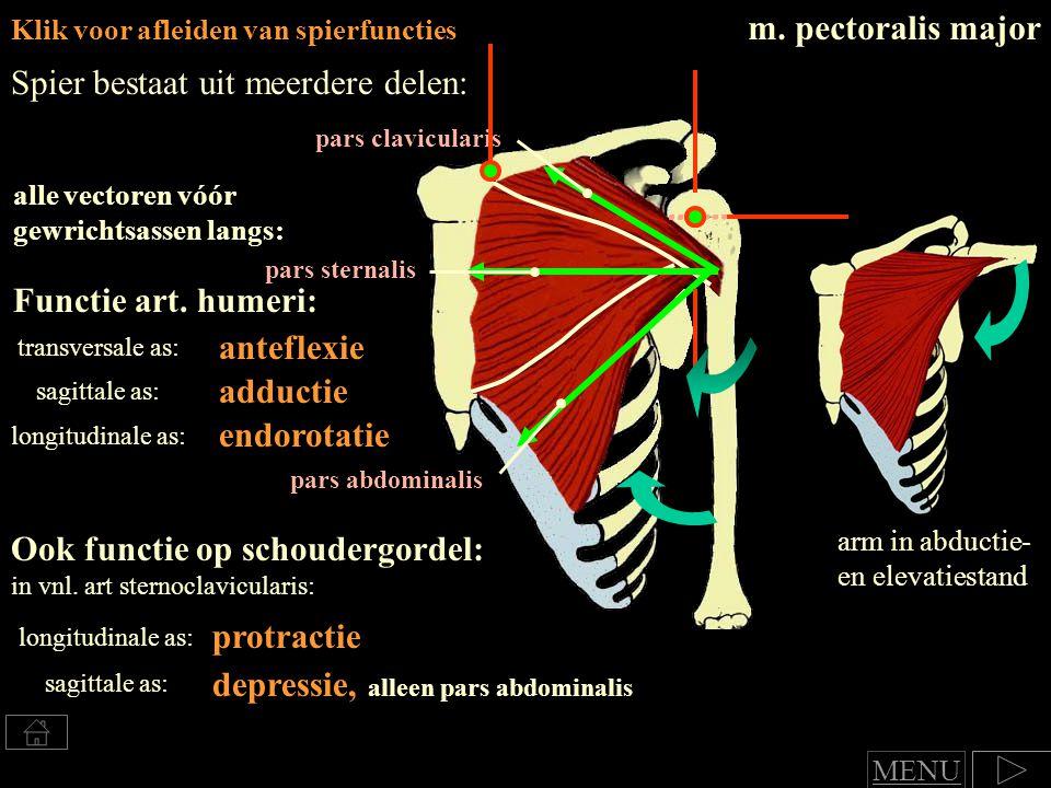 depressie, alleen pars abdominalis protractie Klik voor afleiden van spierfuncties Spier bestaat uit meerdere delen: alle vectoren vóór gewrichtsassen langs: Functie art.