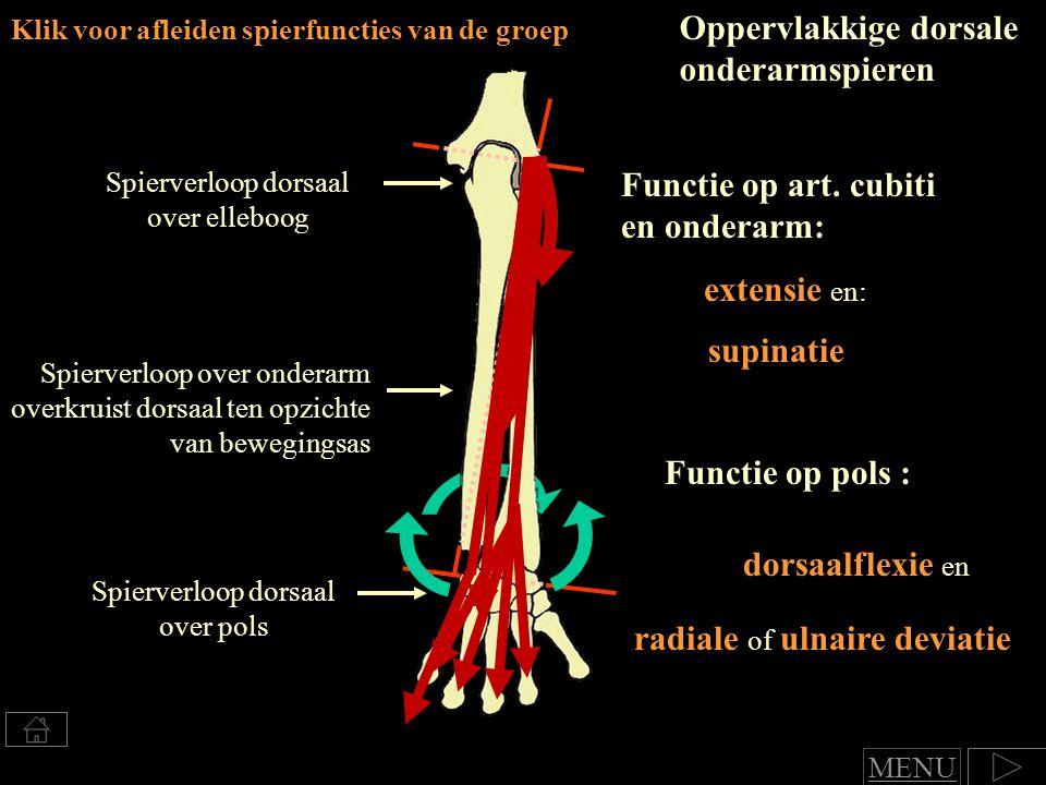 Klik voor afleiden spierfuncties van de groep Oppervlakkige dorsale onderarmspieren Functie op art.
