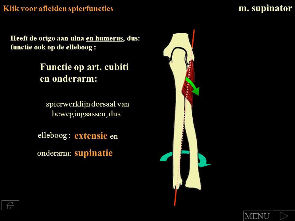 m.supinator Heeft de origo aan ulna en humerus, dus: functie ook op de elleboog : Functie op art.