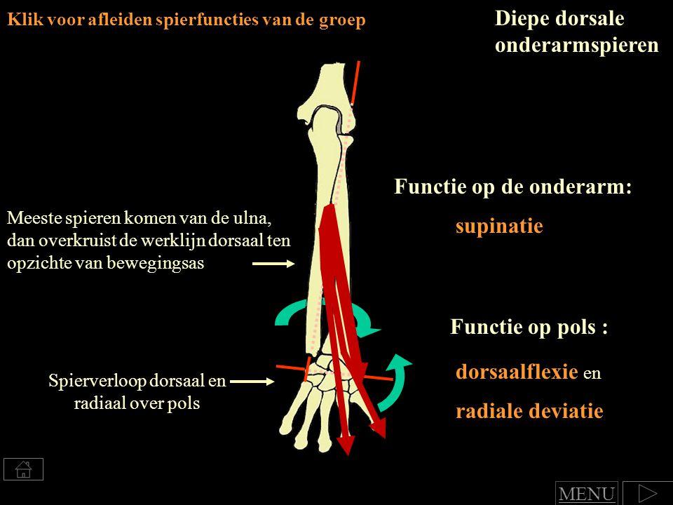 Diepe dorsale onderarmspieren Klik voor afleiden spierfuncties van de groep Meeste spieren komen van de ulna, dan overkruist de werklijn dorsaal ten opzichte van bewegingsas Spierverloop dorsaal en radiaal over pols Functie op de onderarm: supinatie Functie op pols : dorsaalflexie en radiale deviatie MENU