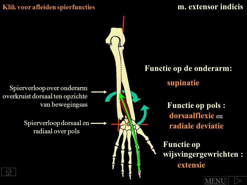 m. extensor indicis Klik voor afleiden spierfuncties Spierverloop over onderarm overkruist dorsaal ten opzichte van bewegingsas Spierverloop dorsaal e