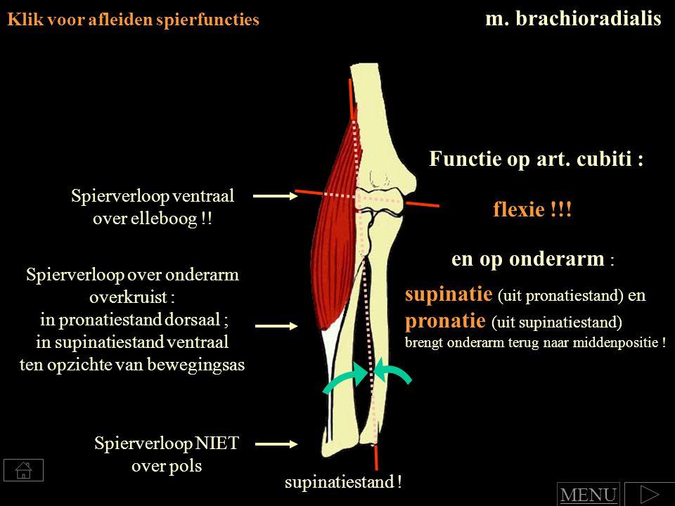 m. brachioradialis Klik voor afleiden spierfuncties Spierverloop NIET over pols supinatie (uit pronatiestand) en pronatie (uit supinatiestand) brengt