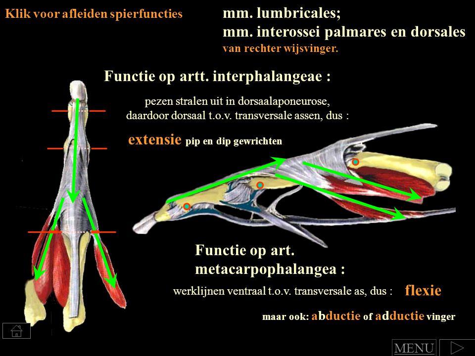 Klik voor afleiden spierfuncties Functie op art.metacarpophalangea : flexie Functie op artt.