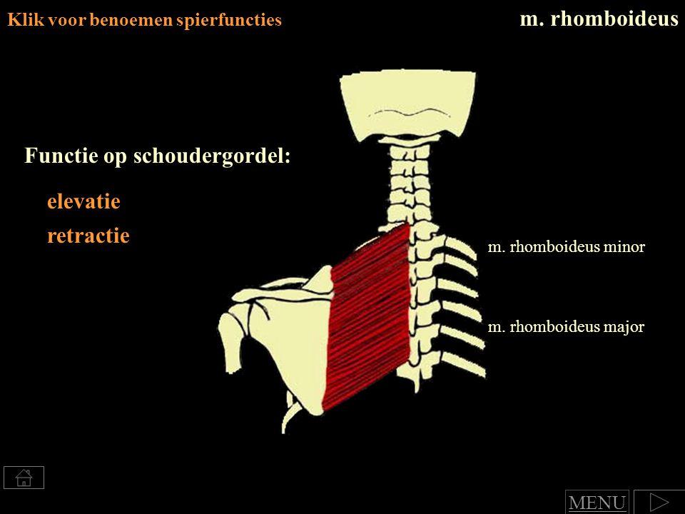 Klik voor benoemen spierfuncties Functie op schoudergordel: elevatie retractie m.