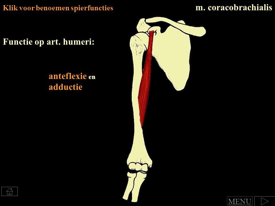 Klik voor benoemen spierfuncties m.coracobrachialis Functie op art.
