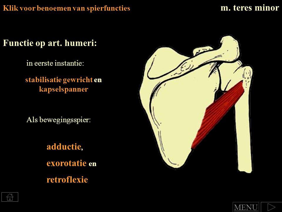 Klik voor benoemen van spierfuncties m.teres minor Functie op art.
