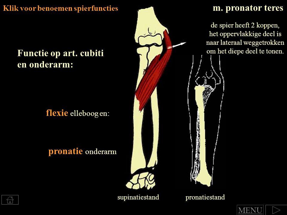 Klik voor benoemen spierfuncties m.pronator teres Functie op art.