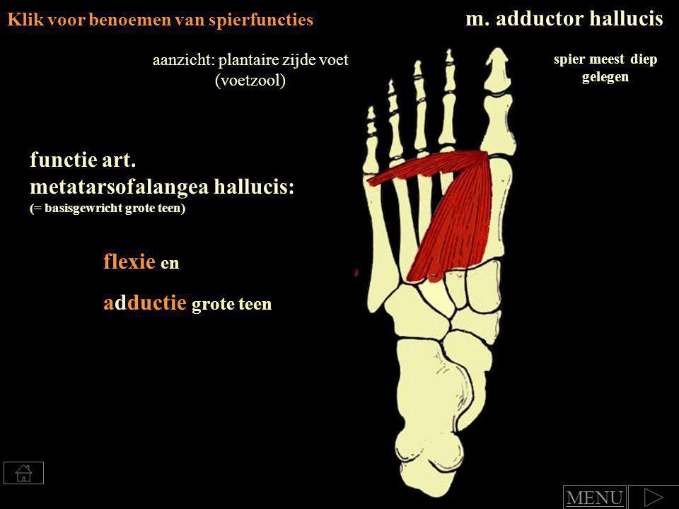 Klik voor benoemen van spierfuncties m.abductor hallucis: functie art.