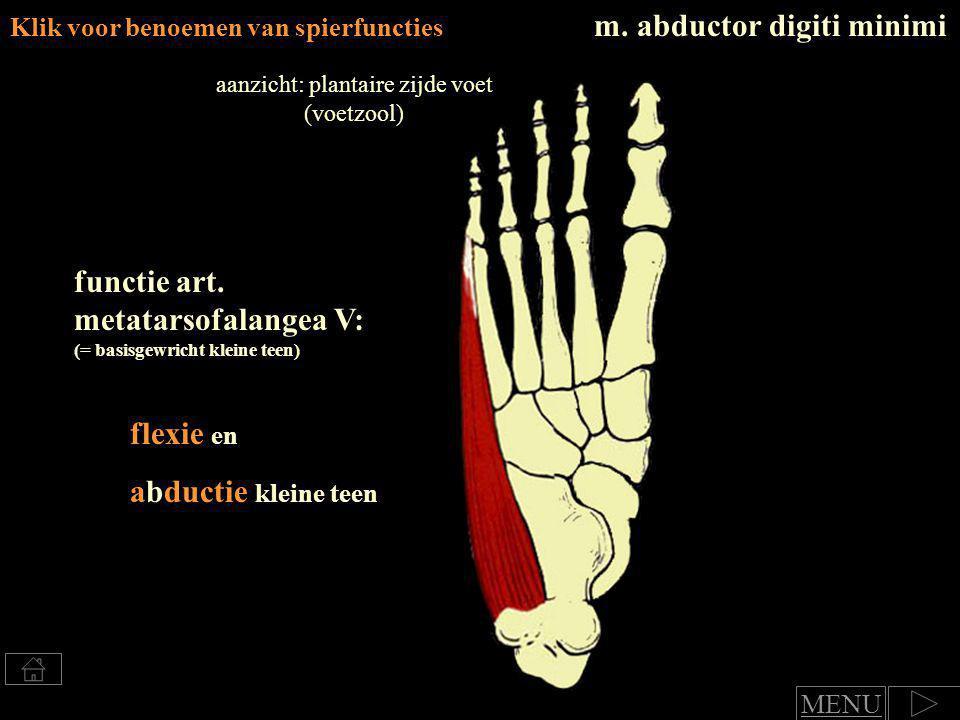 Klik voor benoemen van spierfuncties Beide spieren: functie art.