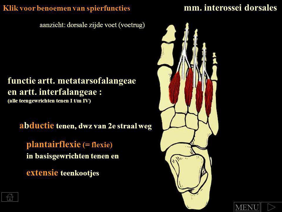 Klik voor benoemen van spierfuncties flexie en adductie (= naar 2e straal toe) in basisgewricht tenen en mm.
