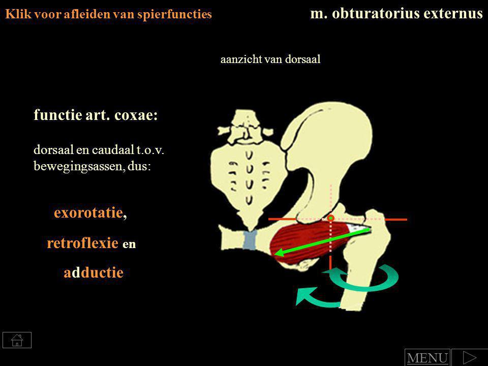 exorotatie en Klik voor afleiden van spierfuncties m.