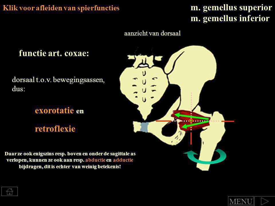 exorotatie, Klik voor afleiden van spierfuncties m.