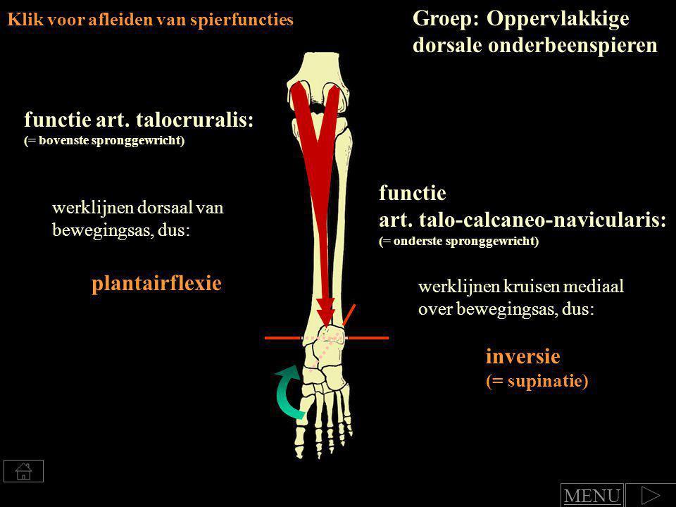 Klik voor afleiden van spierfuncties m.gastrocnemius functie art.