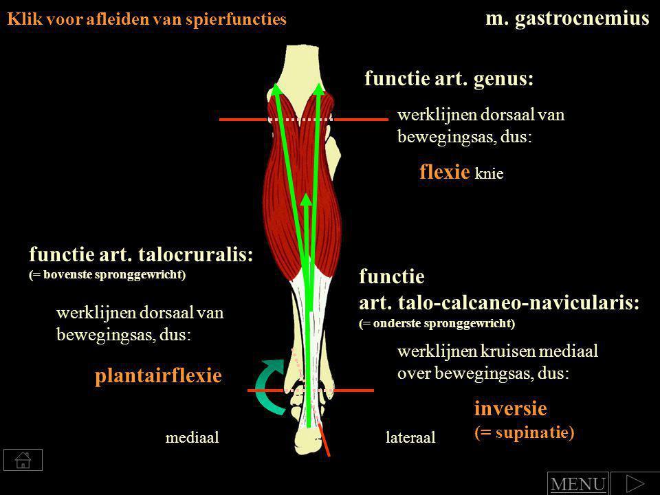 Klik voor afleiden van spierfuncties m.soleus functie art.
