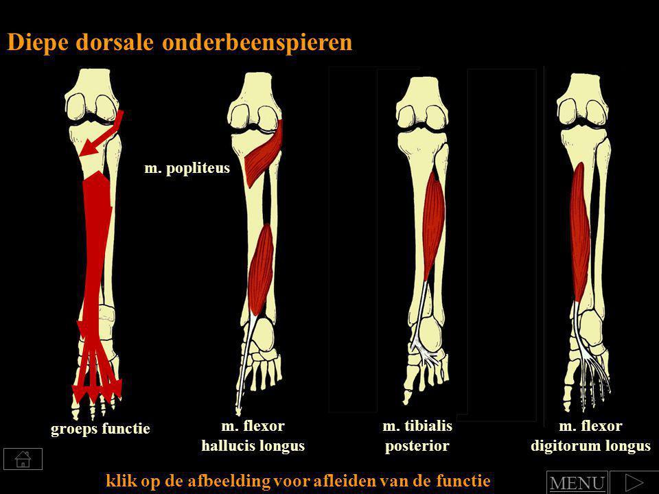 Klik voor afleiden van spierfuncties Groep: Diepe dorsale onderbeenspieren functie art.
