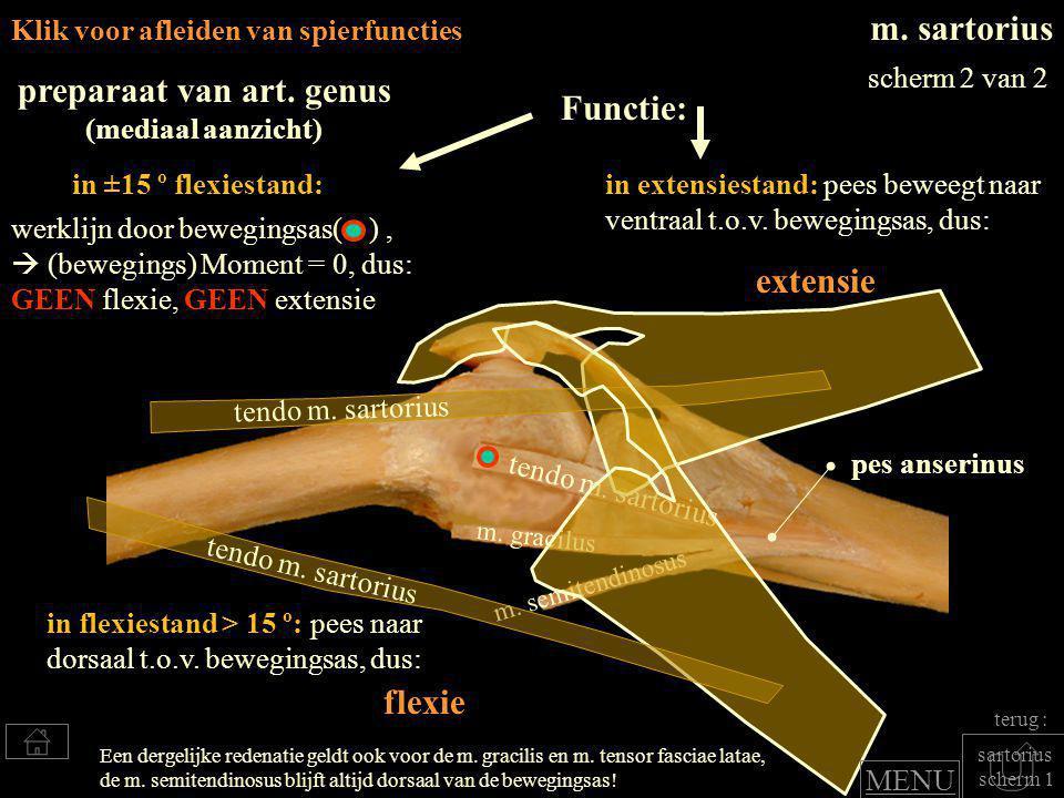 m.tensor fasciae latea m.