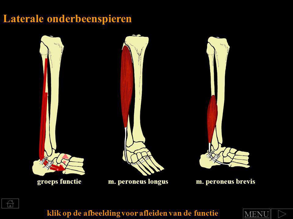 Klik voor afleiden van spierfuncties Groep: Laterale onderbeenspieren functie art.