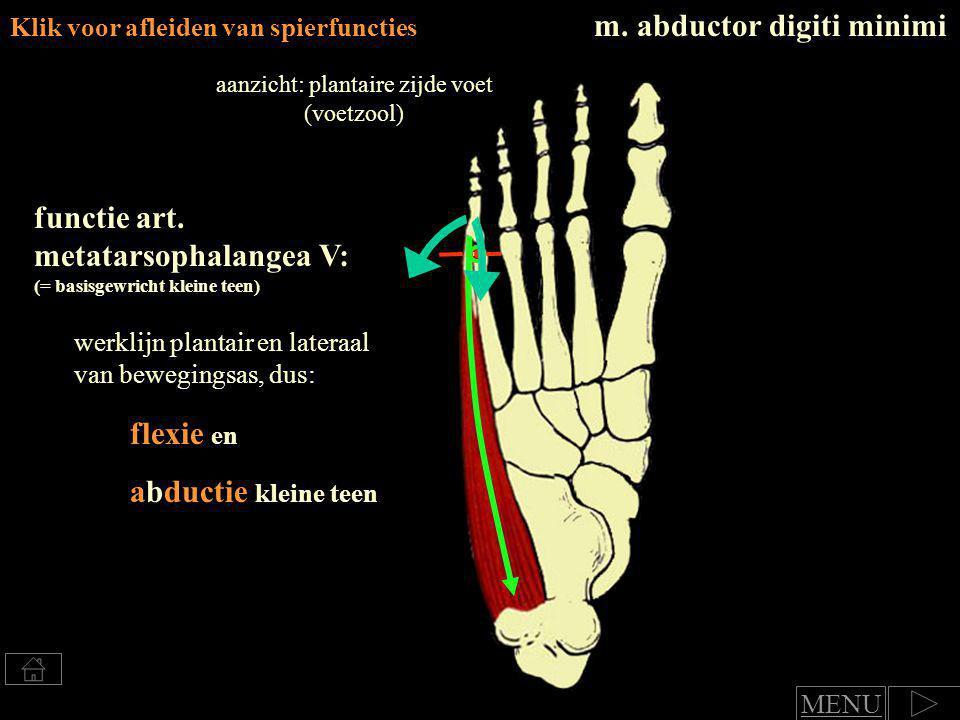 Klik voor afleiden van spierfuncties Beide spieren: functie art.