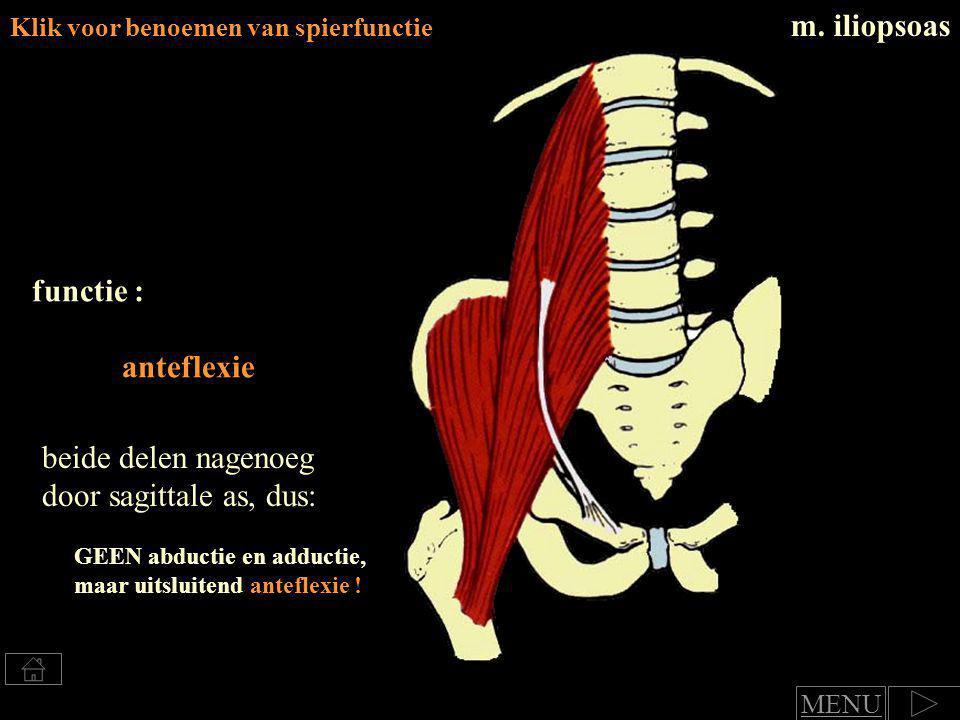 m.quadriceps femoris Klik voor benoemen van spierfunctie m.
