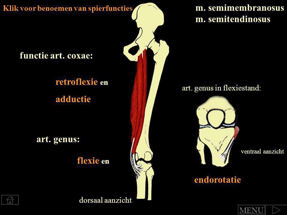 Klik voor benoemen van spierfuncties m.biceps femoris retroflexie en adductie functie art.