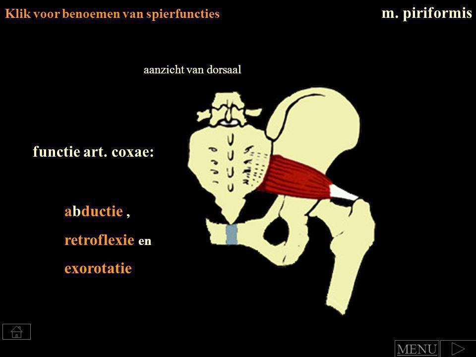 exorotatie, retroflexie en adductie Klik voor benoemen van spierfuncties m.
