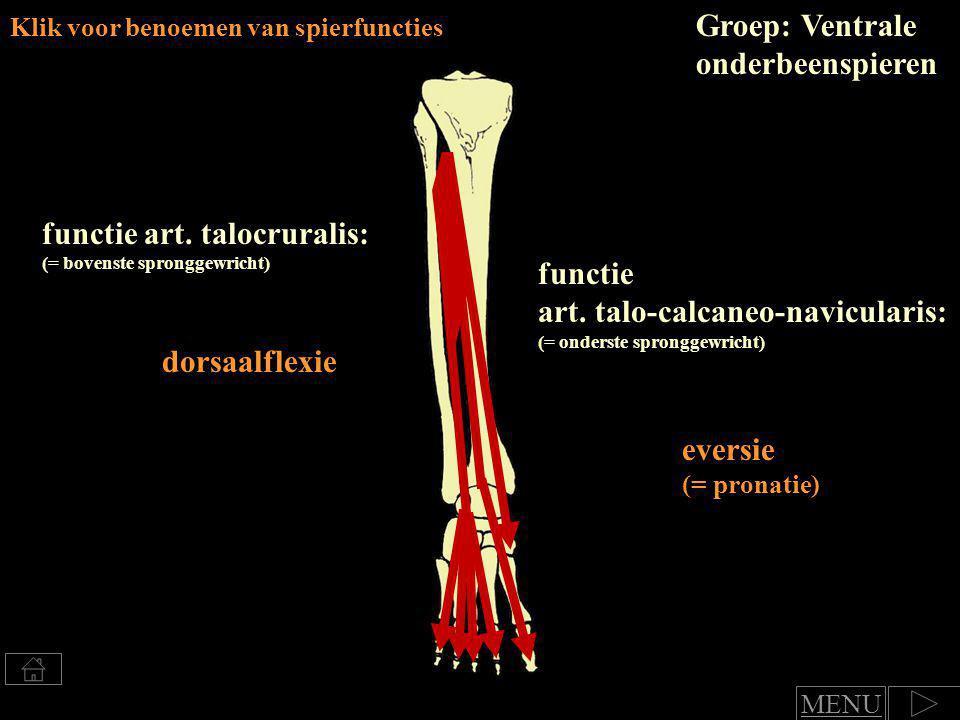 functie art.talocruralis: (= bovenste spronggewricht) dorsaalflexie voet functie art.