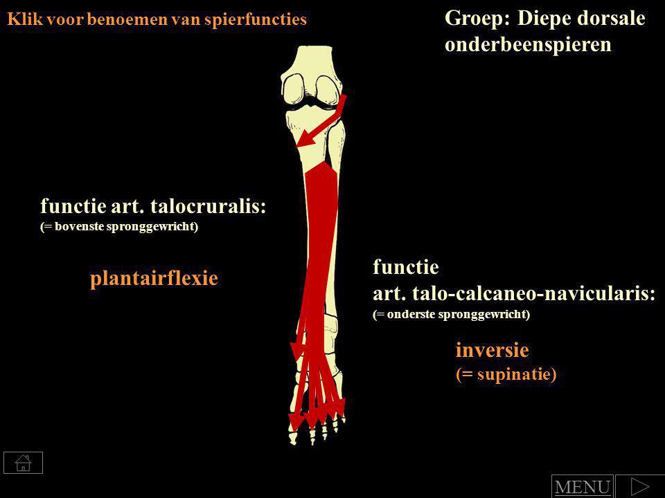 Klik voor benoemen van spierfuncties m.popliteus functie art.
