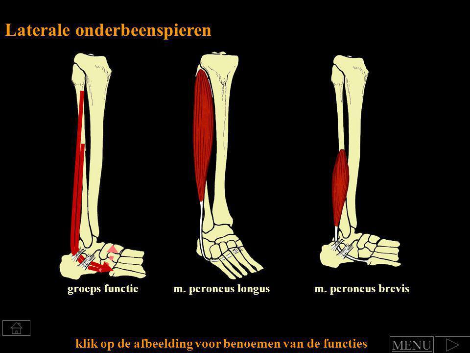 Klik voor benoemen van spierfuncties Groep Laterale onderbeenspieren functie art.